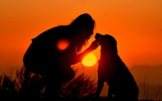 sunset_love_dogs_master_dusk_high_resolution_images